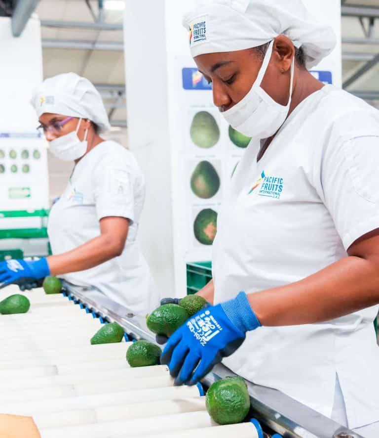 Agroindustria, Invest Pacific