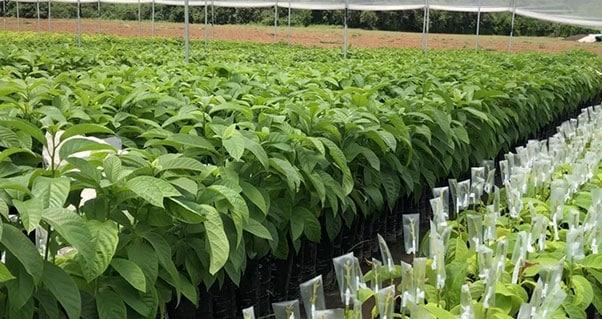 Frutas y flores, el potencial del Valle del Cauca que cautiva a los inversionistas extranjeros, Invest Pacific