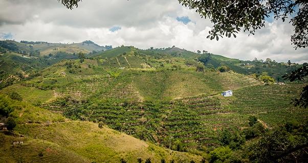 Invest Pacific, tras más inversión de empresas mexicanas interesadas en llegar al Valle del Cauca, Invest Pacific